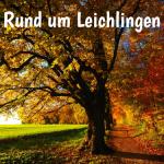 Veranstaltungsbild: großer Baum im Herbst