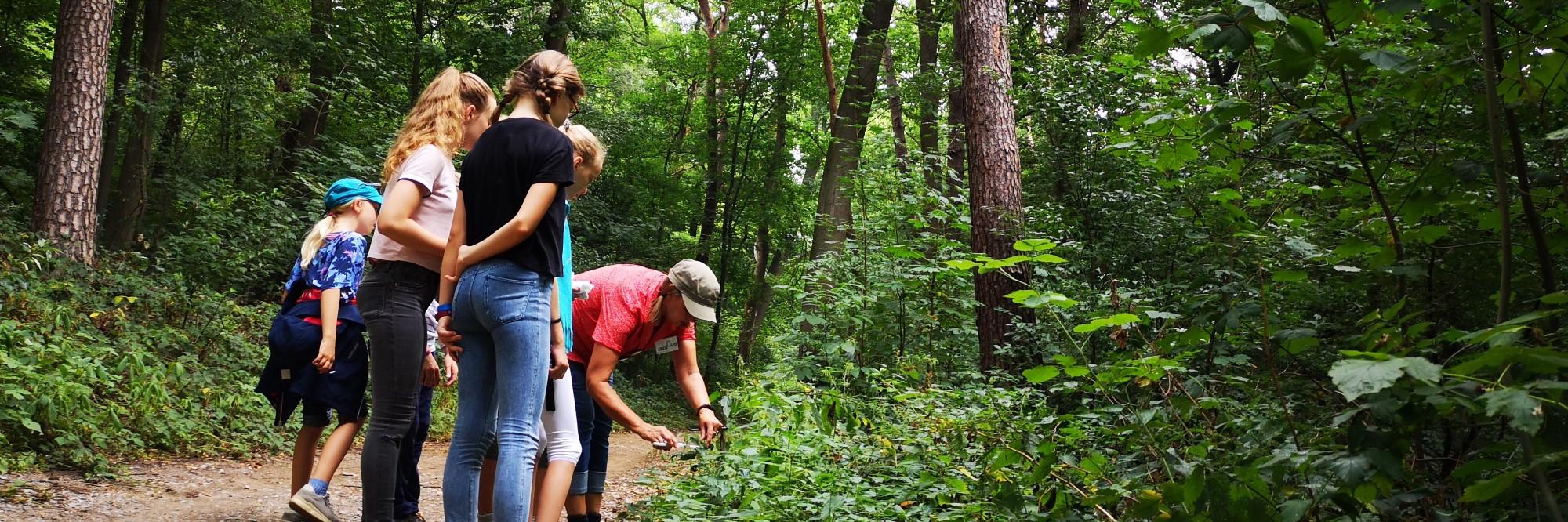 Mädchen sammeln Kräuter im Wald