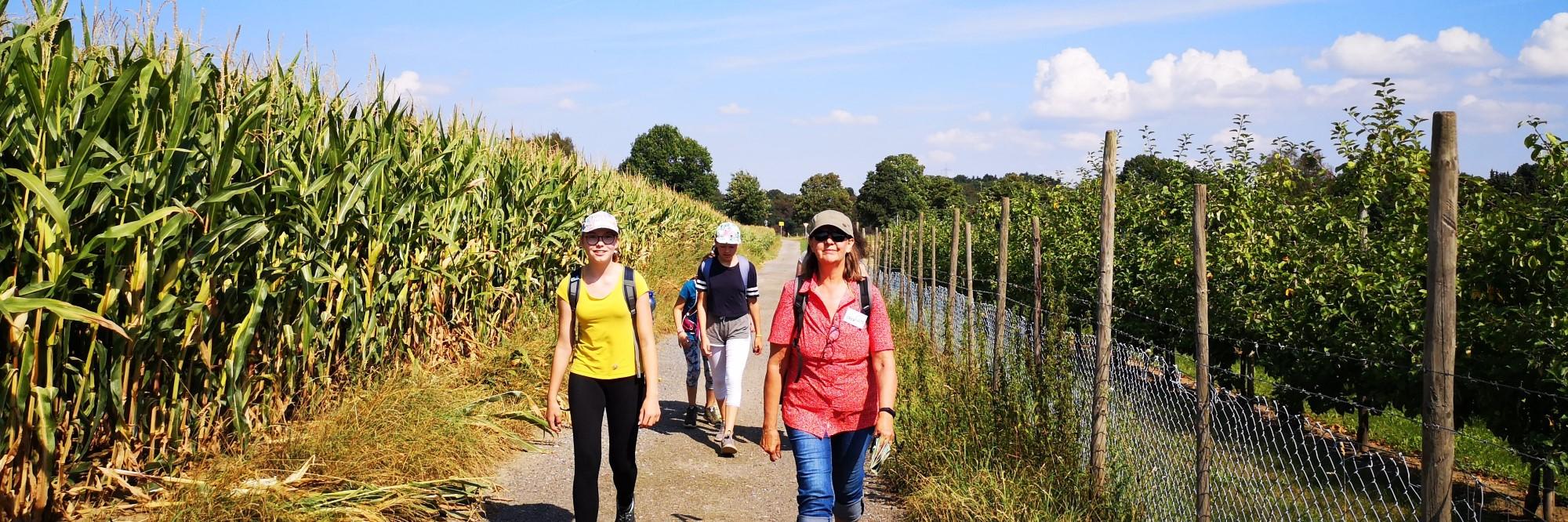 Wanderer auf einem Feldweg